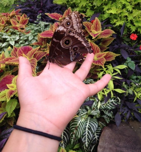http://www.cincinnatiparks.com/butterflyshow